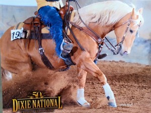 Corona is a stunning Palomino stallion with intelligence, personality, and a stellar show record.