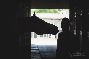 Gorgeous silhouette of a horse and her human.