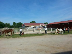 Clinic attendees work with their horses along with Carol Coppinger.