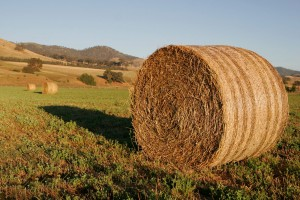 Don't let your extra hay go to waste! We use it to feed our rescue horses!