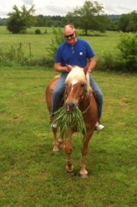 Meet Ajax, a handsome male Haflinger with a taste for greens!