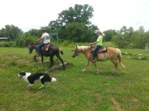 Miracle with our gaited mule and Buzzby, one of our farm dogs.