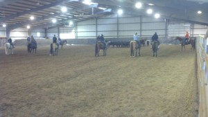 The clinic attendees got plenty of practice with working cattle.
