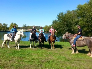 Such a diverse group of mules and horses in this trail ride! Love it!