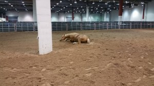 Now that is one relaxed horse.