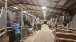 Check out that show barn of ponies!