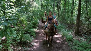 The horses loved these shady trails!