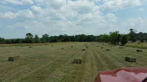 Check out those lovely hay bales!