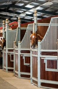 Our show barn has high-quality, roomy stalls ideal for a trainer with multiple horses.