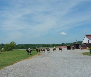 Now that's a party lineup of people and horses!