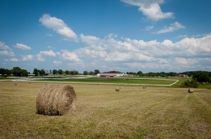 Need hay for the winter? We've got plenty!