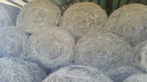 Hay bales are $25/roll or $30/roll with delivery.