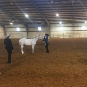 A judge makes her assessment during the halter class.