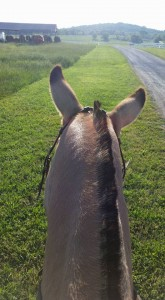 Sometimes you just need to take a break and see the world from a mule's perspective.