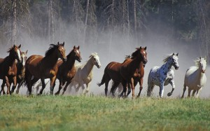Horses are social herd animals, so training techniques should take those instincts into account.