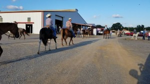 Horses and riders continually circulated between their trailers, the show barn, and the arena.